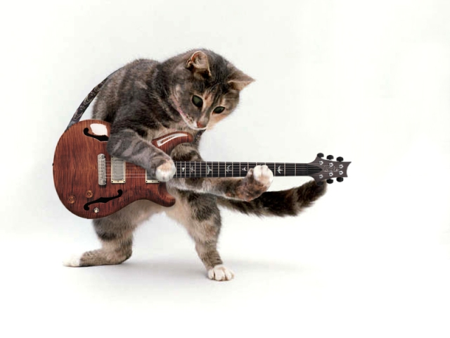 catwithguitar